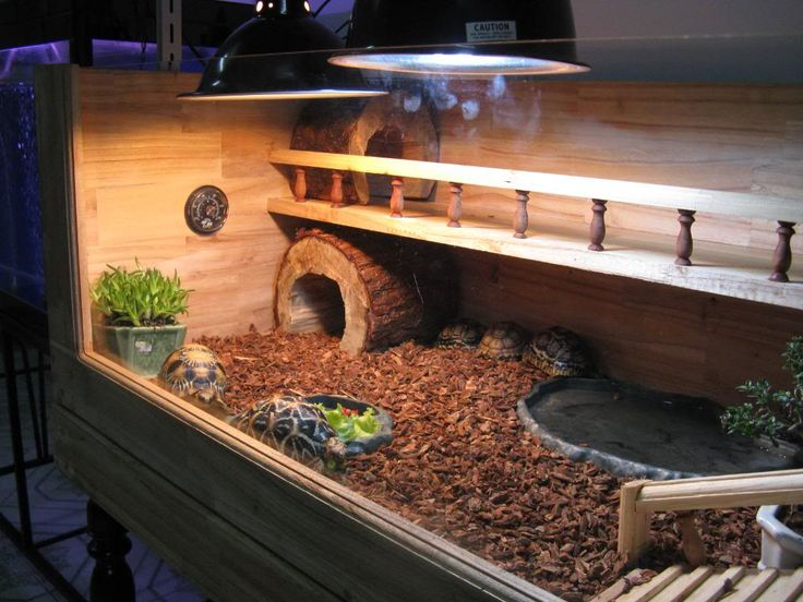 Russian tortoise cage - I love this one! B Pinterest