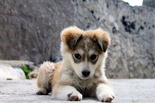 cute,cute,cute!