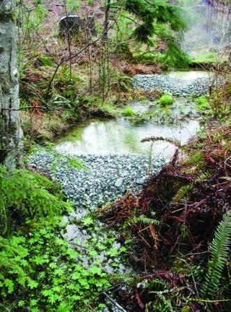 sediment_trap | garden | Pinterest