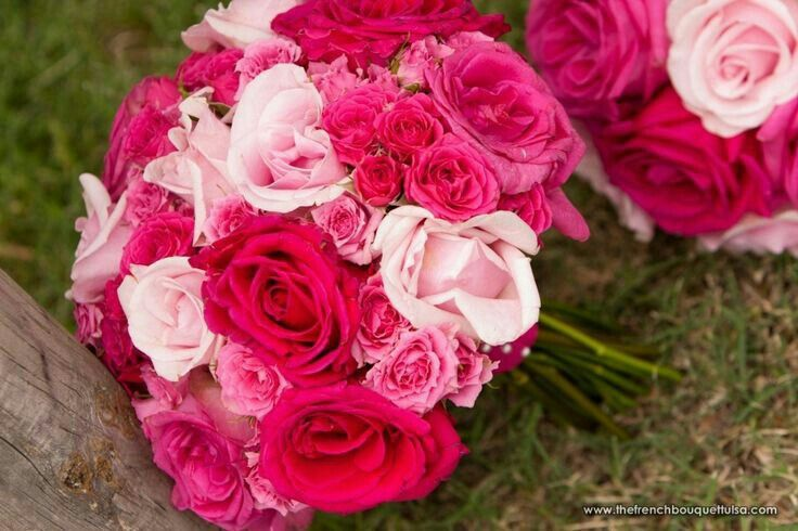 pastel pink roses, pink spray roses, hot pink spray roses, hot, Natural flower