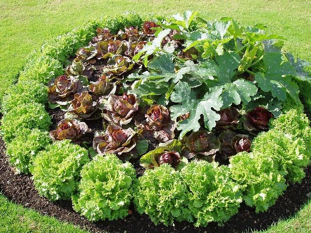 Vegetable garden plot deck patio and garden ideas for Vegetable garden plot ideas