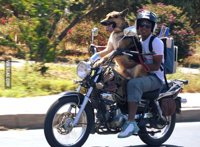 dog riding a Motorcycl...