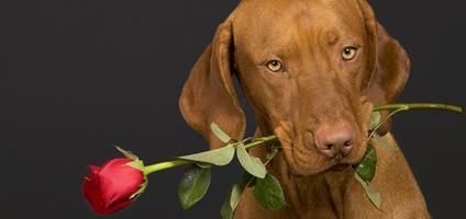 valentine images of dogs