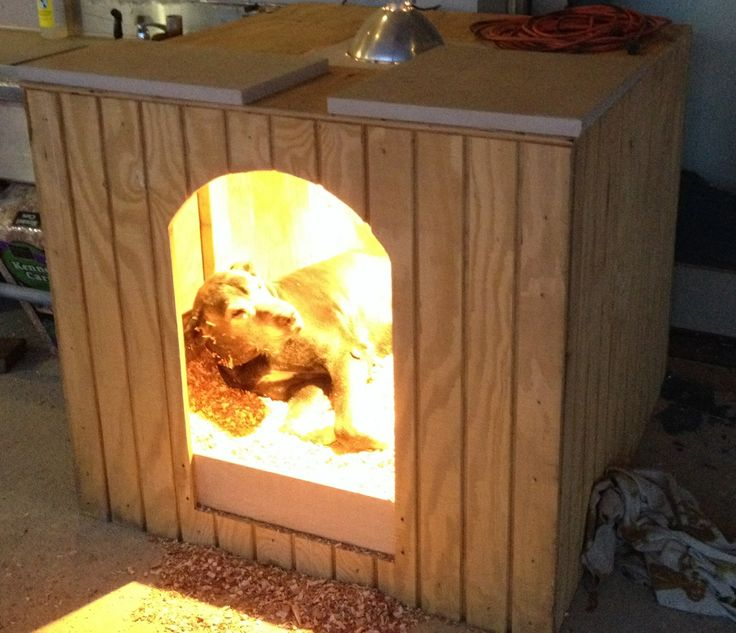 Heated Dog House For Winter