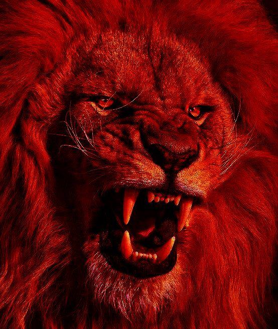 Lion's rage | Fire☠Rage | Pinterest