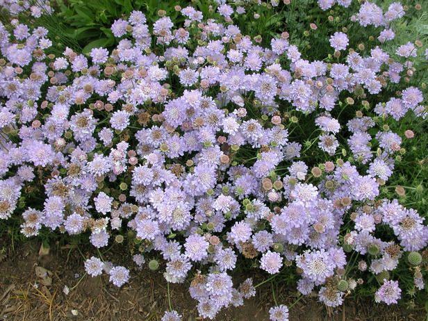 Perennials That Bloom In Summer