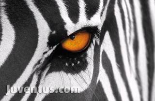Zebra Juventus Amigurumi : Pin by Roberto Riccardi on Juventus Pinterest