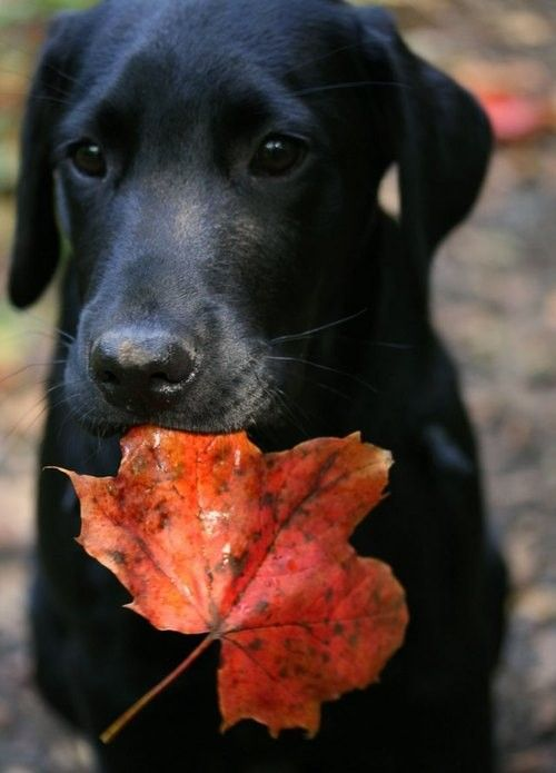 pup with leaf