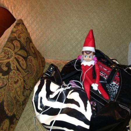 , zebra, elf on the shelf. VOTE for your favorite photos in our Elf ...