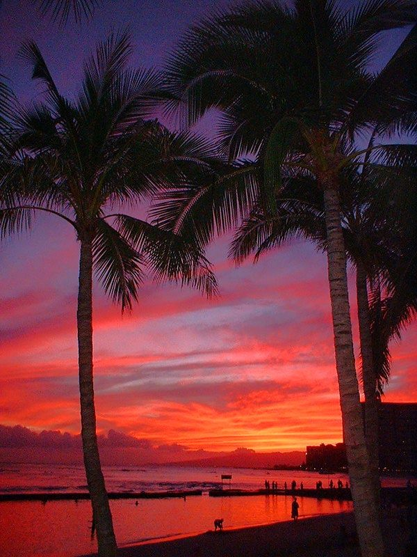 Image result for hawaii travel