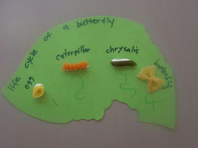 Life cycle of a caterpillar