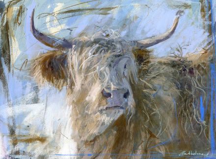scottish highland cattle snow  Highland cow in snow ~
