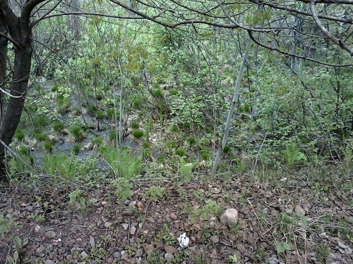Find the fawn...   Brain teaser   Pinterest