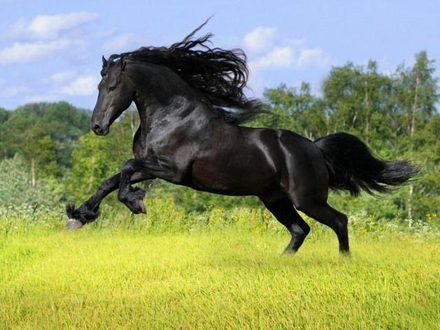 Black horse jumpingBlack Horse Jumping