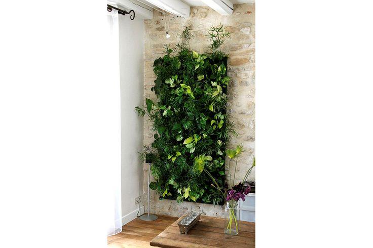 Cuadro vivo decorativo jard n vertical muros vegetales - Cuadro jardin vertical ...