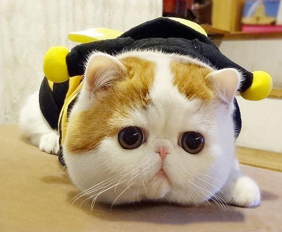 CATS!!!!!!!!!!!! 0b5ae646a36d2d48fc5911cbde8ea4ce