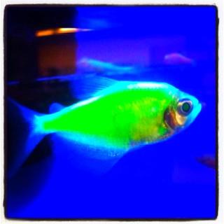 Glow in the dark fish sea animals pinterest for Glow in dark fish