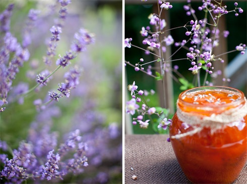 ... provincial France captured in a canning jar: Apricot and Lavender Jam