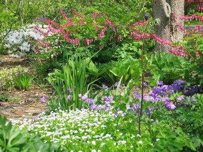Pin by jennifer ledbetter on is it spring yet pinterest for Woodland garden designs