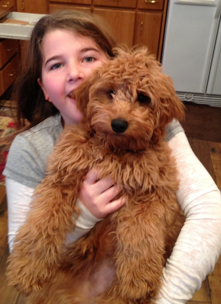 Watch Allergy-Friendly Pets video