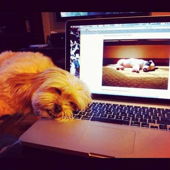 The Infinite SleepinessProject?