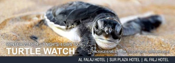 Turtle Watch Package