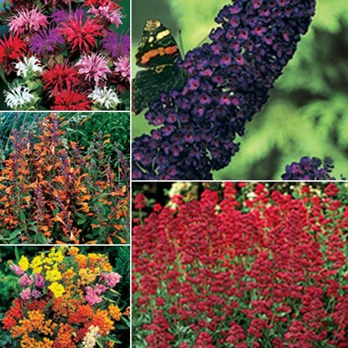 Butterfly And Hummingbird Garden For The Home Pinterest
