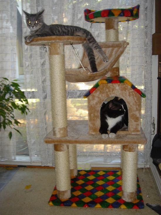 Как самим сделать для кота домик своими руками