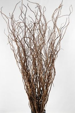 Buy willow branches sydney