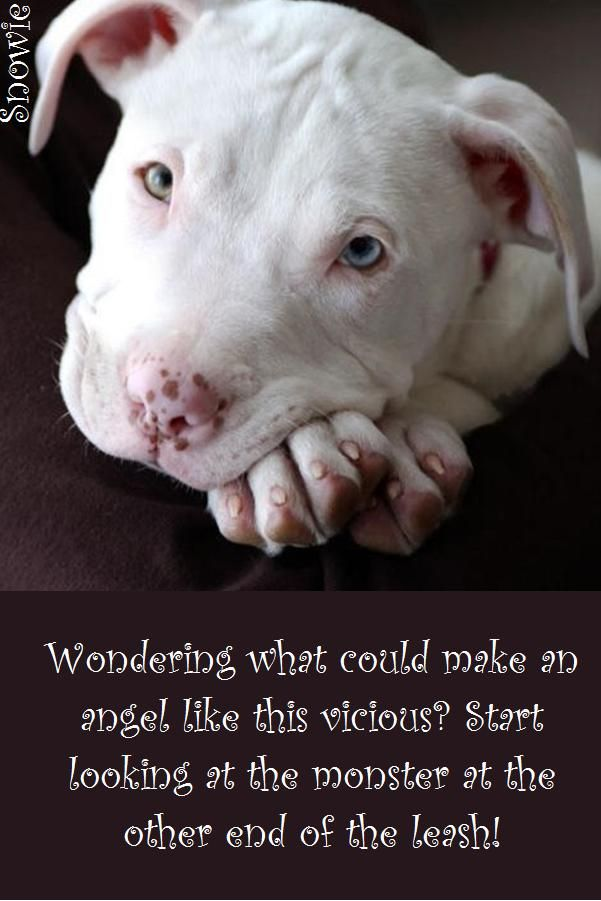 Made by yours truly. Judge the deed, not the breed!
