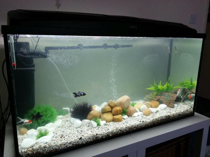 cold water fish tank fishy pinterest
