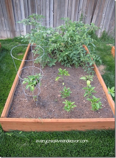 Backyard Garden Boxes : Back Yard and Garden Boxes  ~Backyard Makeover~  Pinterest