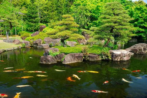 nice koi pond the great outdoors pinterest