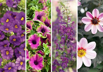 Container Garden Flower Combo
