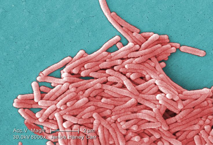 """Legionella - pathogenic Gram negative bacterium. Acquired its name after a July, 1976 outbreak of a then-unknown """"mystery disease"""" sickened 221 persons, causing 34 deaths. The outbreak was first noticed among people attending a convention of the American Legion - an association of U.S. military veterans"""