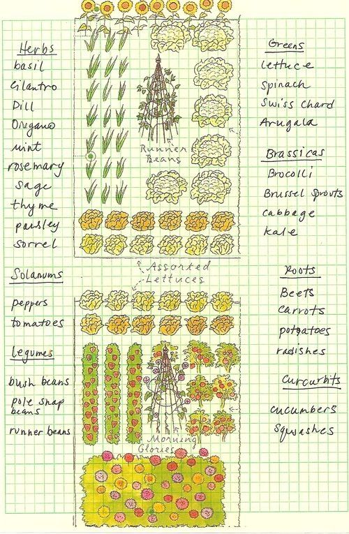how to draw vegetable garden