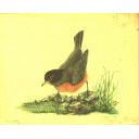 The Birds of Mount Diablo - A Pictorial WPA Project. From the California State Parks E-Museum. 082-457-312.