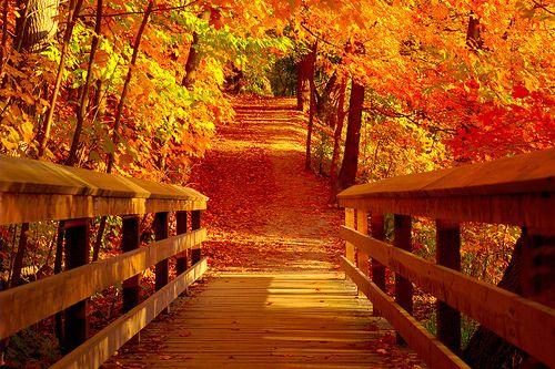 walking in a wonderland of fall