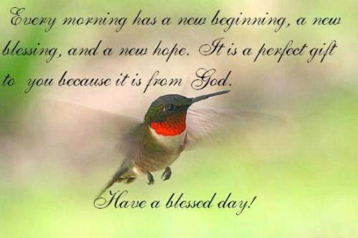 hummingbirds like