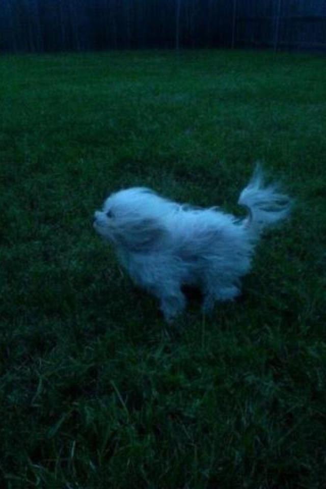puppy during hurricane isaac
