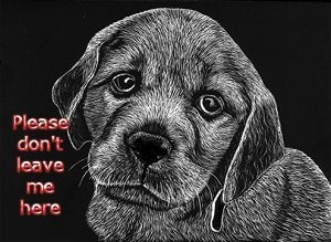 animal abuse what they don't Animal abuse is a people problem animal cruelty is without question spay or neuter your animals or don't let them around other animals while they are.