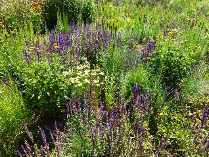 Prairie Garden Plans Prairie Garden Pinterest