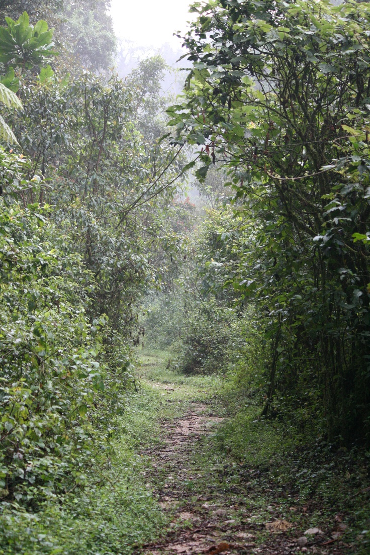 Rwanda | Rwanda | Pinterest
