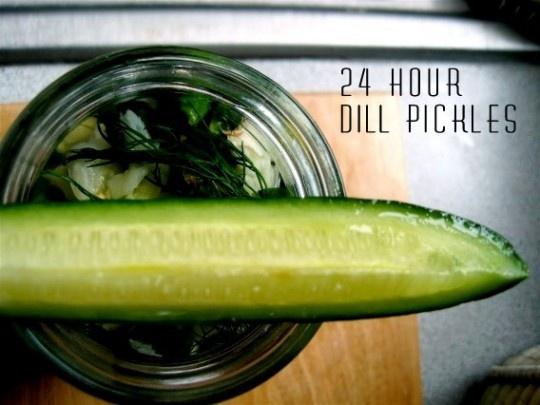 24 hour dill pickles. #PORTLANDIA #WeCanPickleThat... in 24 hours!