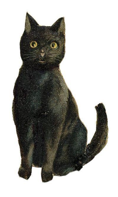 bodega cat definition