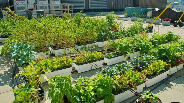 Rooftop Vegetable Gardens : Rooftop vegetable garden  Gardening  Pinterest
