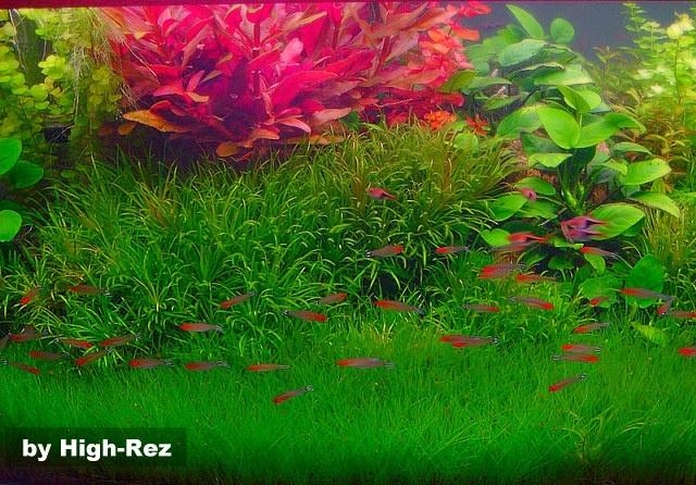 beautiful dutch aquarium Planted Aquariums Pinterest