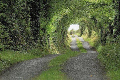 Tree Tunnel, Clare County, Ireland  photo via cloud
