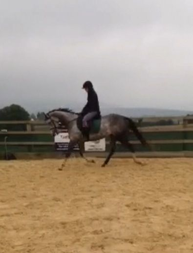 pleasure to do on every way. Perfect for child/teen coming off ponies