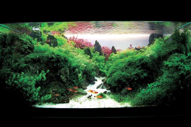 Amazing planted fish tanks Planted aquariums Pinterest